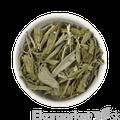BIO Šalvia Sonnentor 50g - sypaný čaj