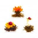 Kvitnúce čaje - čierne